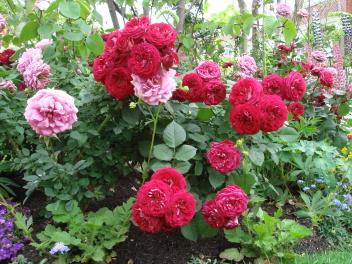 池田理代子さんの庭