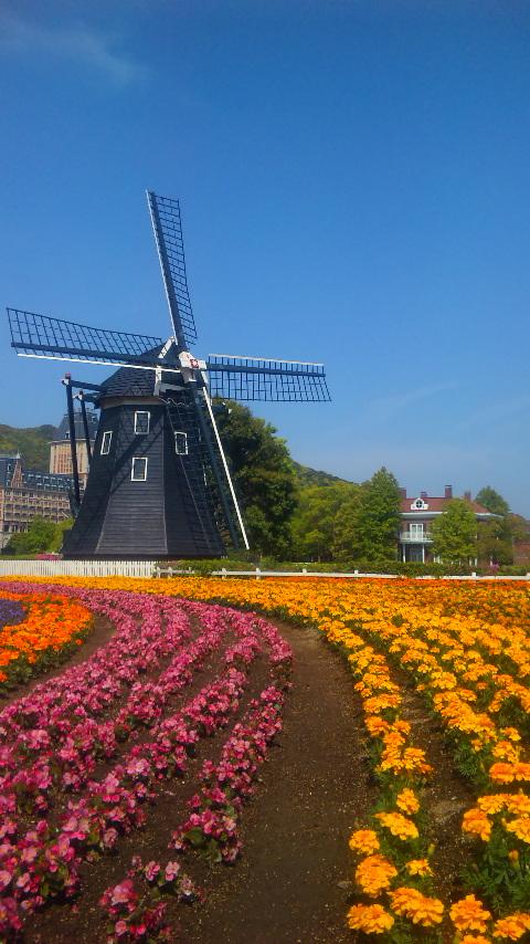 ハウステンボスの風車と花畑(キンデルダイク前)