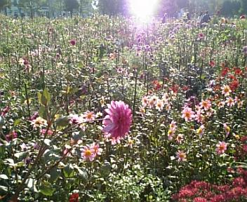 極楽の花園