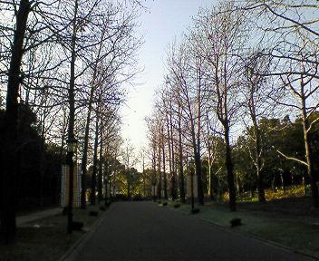 パレスハウステンボスへの道